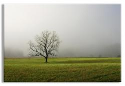 Lone Tree in Foggy Field