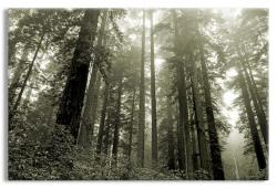 Lady Bird Grove in Redwood National Park