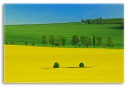 Colorful Spring Landscpae