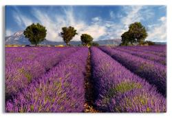 Lavender Avenues in Provence