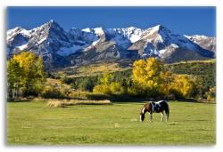 Horse Grazing in a Colorado Landscape