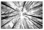 Bare Tree Branches in Black and White