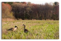 New England Farmer's Field