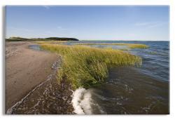 Cape Cod Shoreline