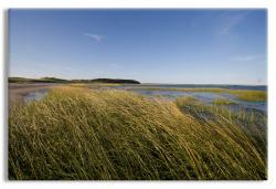 Beach Grass, Cape Cod Bay