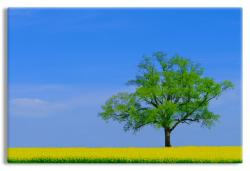 Spring Landscape with Lone Tree