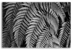 Intimate Study of Ferns in Black and White