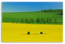 Colorful Spring Landscpae