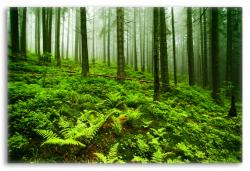 Soothing Forest Landscape