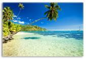 Palm Tree Over a Tropical Beach