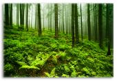 Soothing Forest Landscape